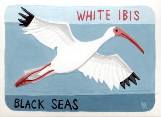 WhiteIbis