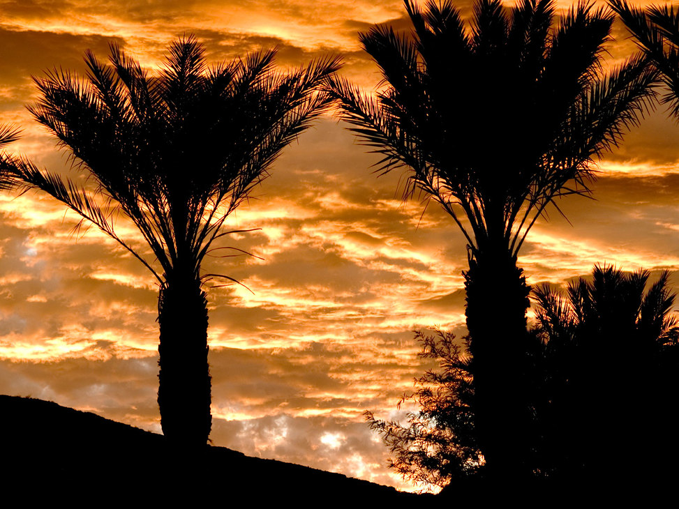 Golden-sky-palms