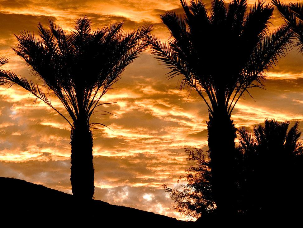 Golden-sky-palms