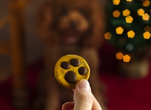 Paw Print Dog Treats