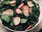 Radish and Watercress Salad