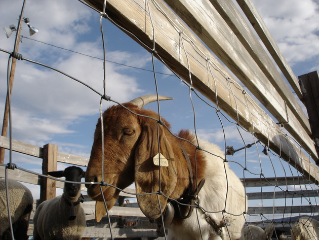 Photo 8 - Westernaires 2007
