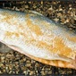 Easy smoked trout with World Harbors marinades