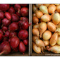 For the Love of Shallots | Gourmet Italian