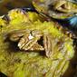Twice-Baked Honey Nut Acorn Squash