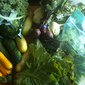 Adventures in CSA (2012): Week 5 Pick-Up