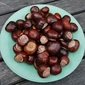 conkers and cookers