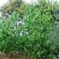 Tuscan Figs Jam