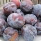 Recipe: Judith's plum torte