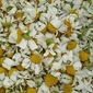 HOME: Health, Beauty and Home Uses for Chamomile