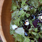 Beet and Goat Cheese Salad with Basil and Balsamic