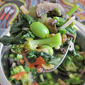 Broccoli with Edamame, Tomatoes and Onions - Nature's Best Cancer Preventing Food