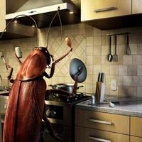 Chef Roach