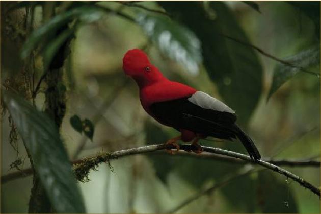 Mashpi Rainforest Biodiversity Reserve