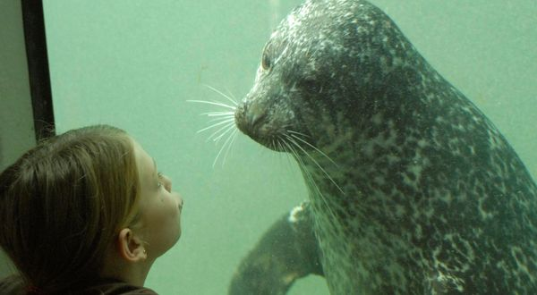 See harbour seals at Fundy Discovery Aquarium