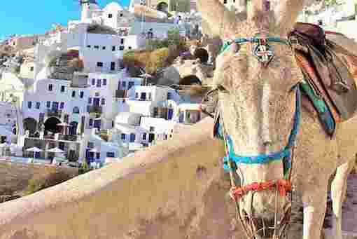 Santorini Donkey - Thira Destination Wedding