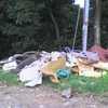 Se da tala de bosque secundario y basurero en predio ilegal en Hatillo 8