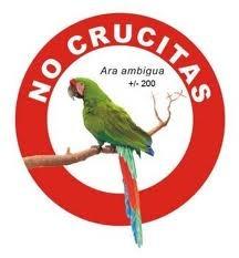 No crucitas_large