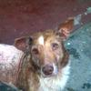 Lost Dog Needs Medication