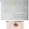 Benedicto XVI otorga rosario de oro a la Virgen de Los Angeles