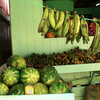 Honduras, Central America's largest watermelon exporter