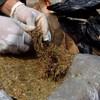 Gobierno estudia posibilidad de legalizar amapola y marihuana