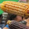 Cultivando Semillas Libres Del Mercado