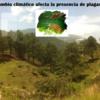 LAS PLAGAS DEL CAMBIO CLIMÁTICO