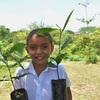 El Salvador Lucha Contra La Deforestación