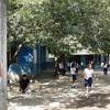 Arte, Música Y Piscina En Escuela Publica