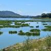 Conservación De Los Humedales Frente A La Crisis Del Agua