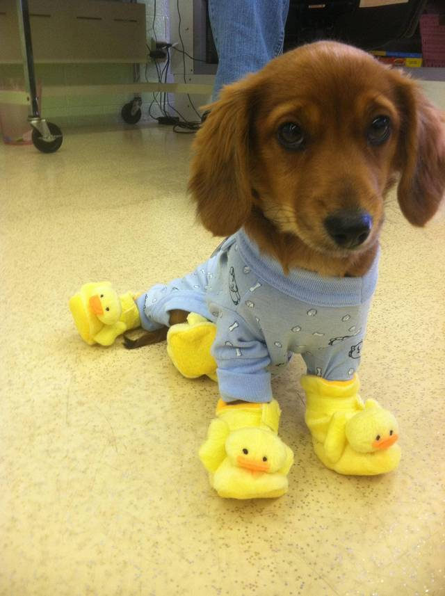 Polamalu wearing pajamas and Ducky slippers