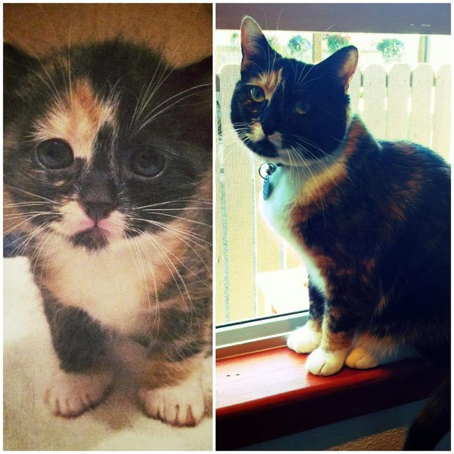 A year ago and today. Sally was the runt and barely made it. Glad she did.