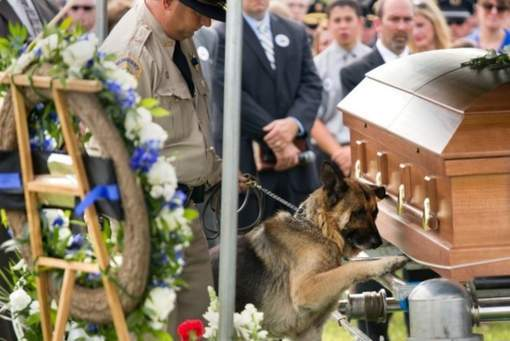 Police dog gives his paw one last time to his partner