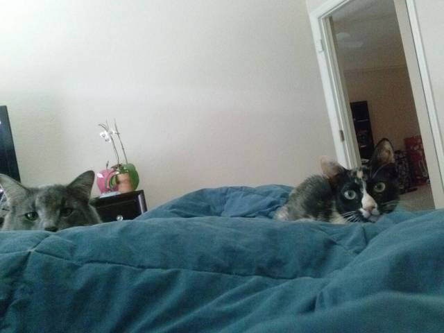 This is what I wake up to every morning.