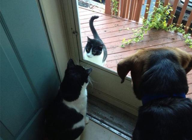 My cat met the neighborhood cat today....it was awkward.