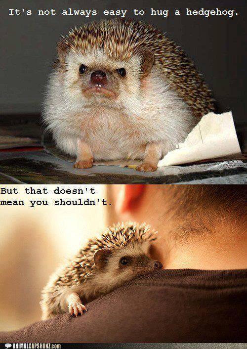 Hedgehogs can be cute