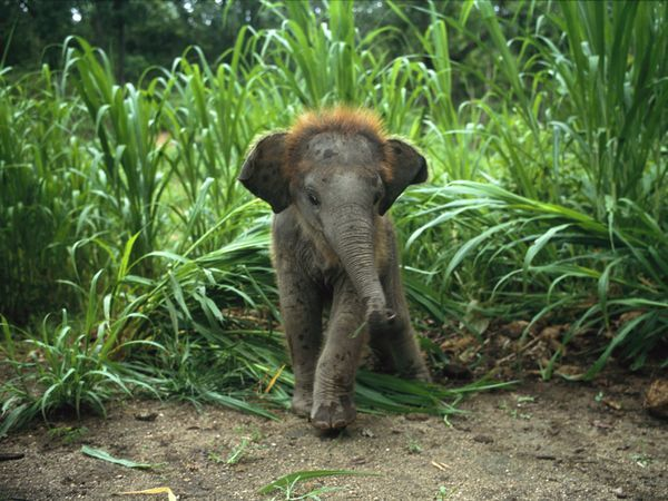 Baby elephant in tall grass (from /r/elephants)