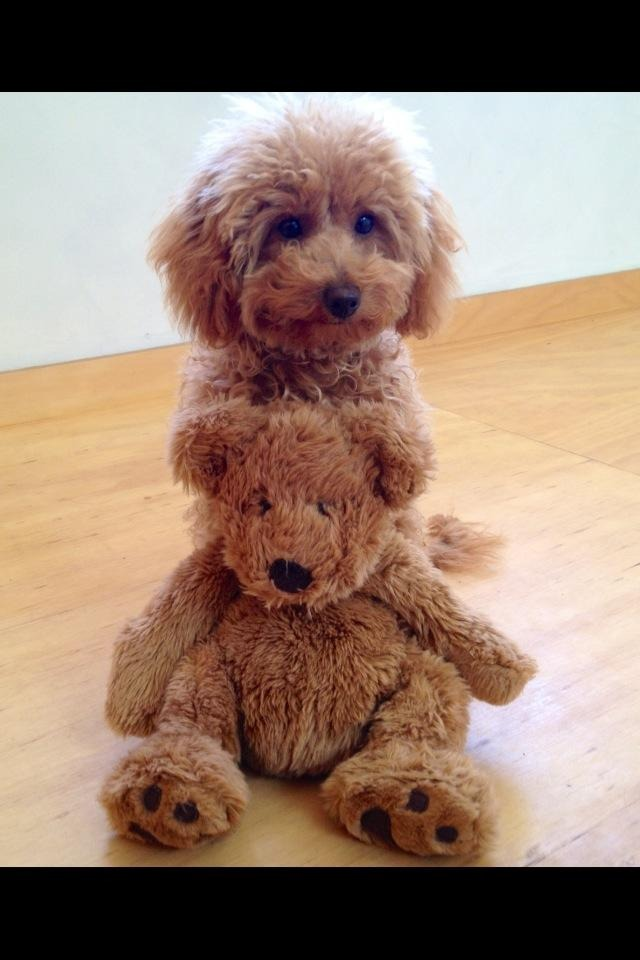 Jett with her favourite teddy
