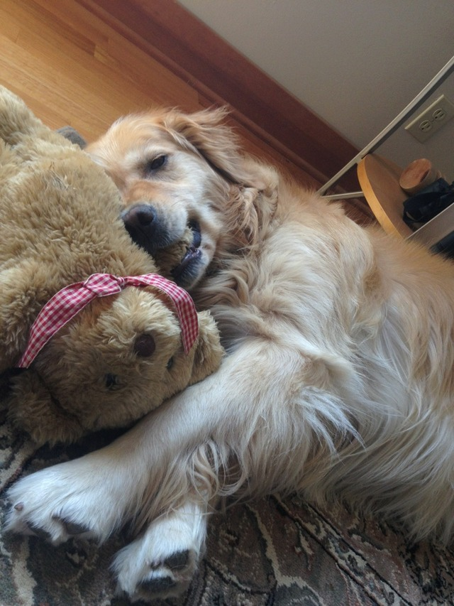 She has had this bear for 2 years and carries it everywhere. It's the only toy she won't tear up