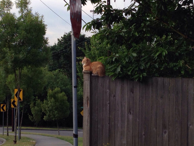 Guardian cat protects our neighborhood.