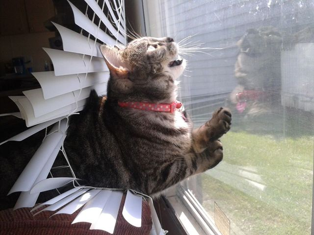 Must. Catch. The. Bug.