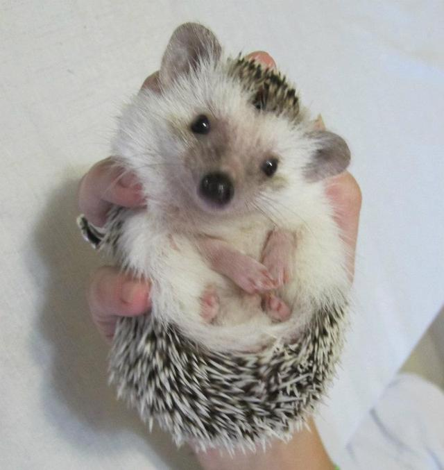My brother is still the only one that can hold his hedgehog...