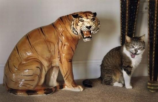 When I grow up, I wanna be a tiger!