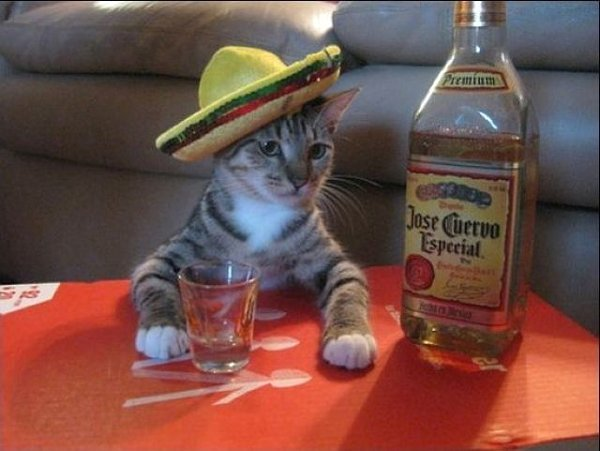 This is cat wearing a sombrero