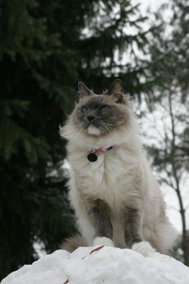 Glorious Snow Cat