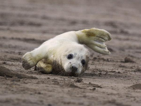 There is not definitely not enough baby seals in this subhandful of cute