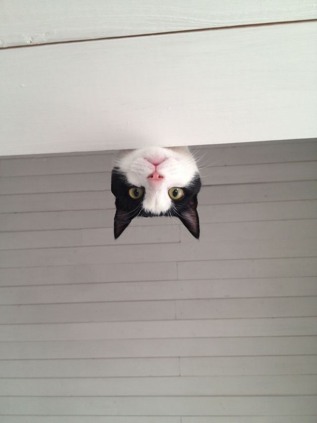 I walked into my cousin's house, and this is what greeted me from the floor above