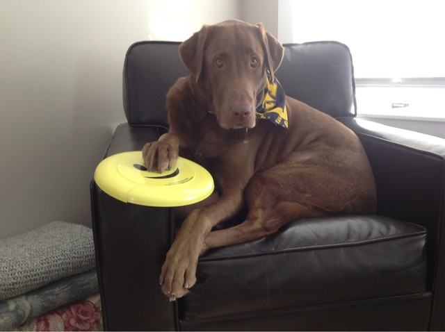 I am Pauly, this is my frisbee, let's go........