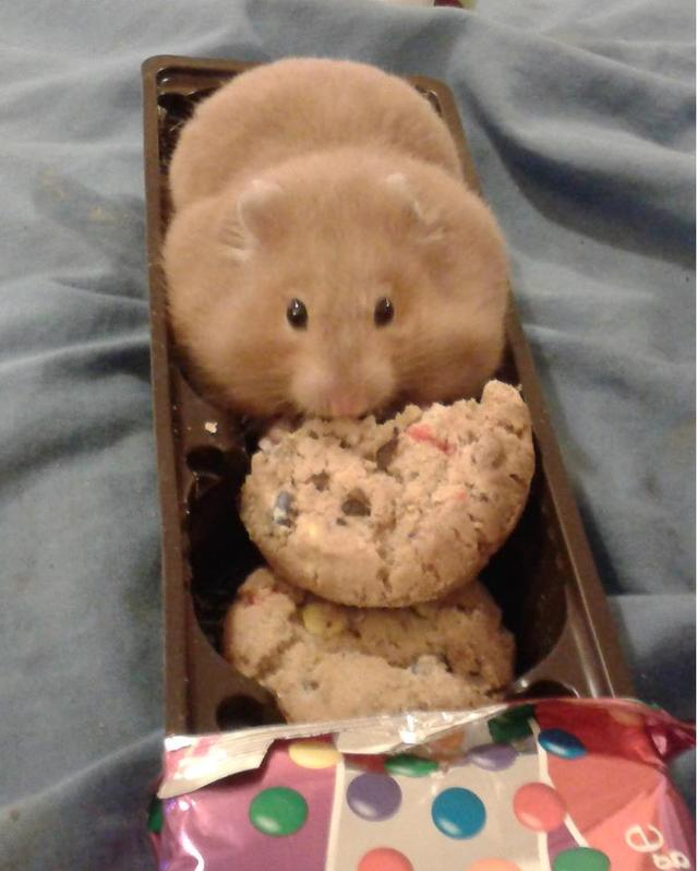 I fits and sits. And eat.